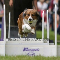 PIP 2016 saskatoon-sk-chance-demonstrates-flyball resized
