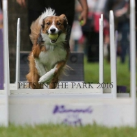 PIP 2016 saskatoon-sk-chance-demonstrates-flyball1 resized