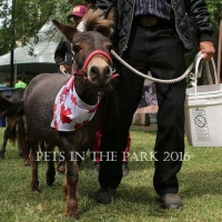 PIP 2016 saskatoon-sk-molly-the-pony-at-pets-in-th resized