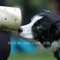 PIP 2016 saskatoon-sk-sparky-sniffs-out-the-hidden resized