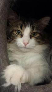 SCAT Saskatoon Cat