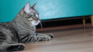 SCAT Street Cat Rescue